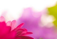 一朵红色花的宏观图象 库存图片