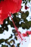 一朵红色花的黎明在房子庭院里 免版税库存图片