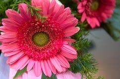 一朵红色花Upclose的照片 免版税库存图片