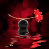 一朵红色雏菊的静物画与反射的在黑背景 库存照片