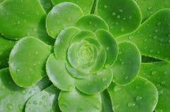 一朵绿色花的宏观射击 免版税库存图片