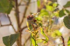 一朵绿色花的开花 免版税库存图片