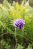 一朵美丽和野花 库存照片