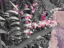 一朵美丽的兰花 免版税库存照片
