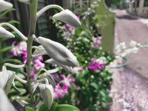 一朵美丽的兰花 免版税库存图片