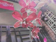 一朵美丽的兰花 库存图片