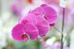一朵美丽的兰花 免版税图库摄影