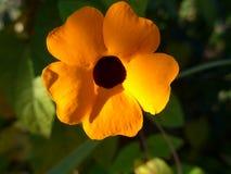 一朵美丽的开花的橙色夏天花 图库摄影