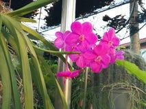 一朵美丽的桃红色兰花花 库存图片
