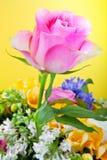 一朵美丽的桃红色玫瑰在与花的黄色背景中 库存照片
