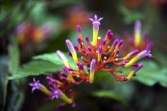 一朵美丽的毒花在森林的中部 库存图片