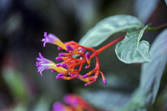 一朵美丽的毒花在森林的中部 图库摄影