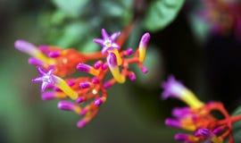 一朵美丽的毒花在森林的中部 库存照片