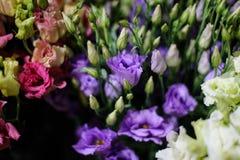 一朵美丽的白色,绯红色和紫罗兰色花的背景 免版税库存图片