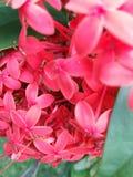 一朵美丽的红色花的接近的捕获 库存照片