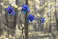 一朵美丽的花在森林 免版税图库摄影