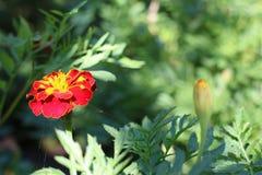 一朵美丽的花在阳光下 免版税库存图片