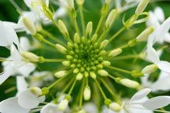 一朵美丽的花的中央 库存图片