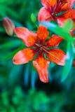 一朵美丽的花的特写镜头 库存图片