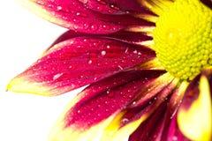 一朵美丽的花 库存图片