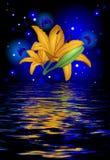 一朵美丽的莲花的反射与蝴蝶的 免版税库存照片