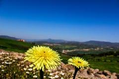 一朵美丽的黄色花有美妙的背景 库存照片