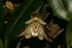 一朵美妙的兰花花的宏观照片 库存照片