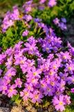一朵美妙的花在庭院装饰被埋置在夏天 库存照片