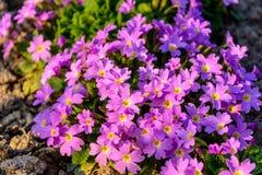 一朵美妙的花在庭院装饰被埋置在夏天 免版税库存照片