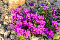 一朵美妙的花在庭院装饰被埋置在夏天 库存图片