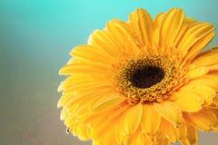 一朵自然花的演播室摄影 库存图片