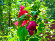 一朵花在一个花圃里在一个夏日 库存照片