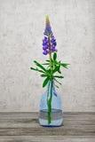 一朵花在一个玻璃花瓶的一个羽扇豆 库存照片