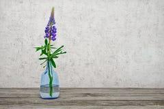 一朵花在一个玻璃花瓶的一个羽扇豆 免版税库存图片