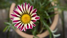 一朵花在庭院里 免版税库存图片