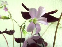 一朵花在房子里 免版税库存照片