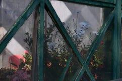 一朵花在玻璃房子里 免版税库存照片