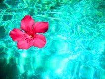 一朵花在水中 免版税库存照片