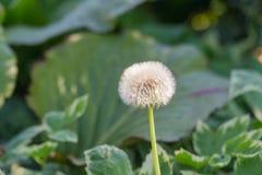 一朵花有中心焦点迷离背景 免版税库存照片