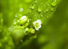 一朵花的宏观照片与露滴的 免版税库存图片