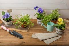 一朵花的幼木种植的在一张白色木桌上的一个罐与园艺工具 爱好从事园艺的概念 n 库存图片