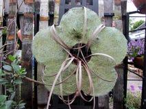 以一朵花的形式装饰在fenceÑŽ 图库摄影
