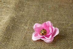 以一朵花的形式鹌鹑蛋对复活节假日 免版税图库摄影