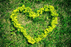 一朵花的心脏在草的 免版税库存图片