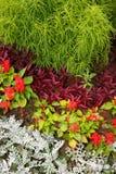 一朵花的片段用不同的色的花和植物的 库存图片