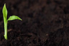 一朵花的绿色新芽在地面的 库存图片