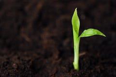 一朵花的绿色新芽在地面的 免版税库存照片