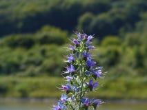 一朵花的详细的看法在河易北河的 库存照片