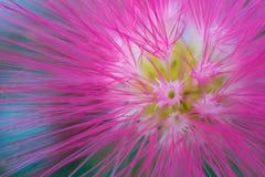 一朵萤光热带桃红色花的宏观细节 库存照片