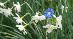 一朵蓝色花在引人注意的焦点 库存图片